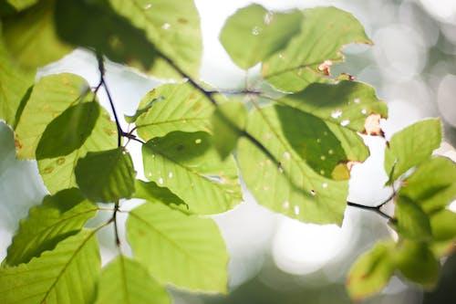 Foto stok gratis abstrak, alam, alami, backlit