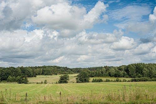 Foto stok gratis agrikultura, alam, alami, awan