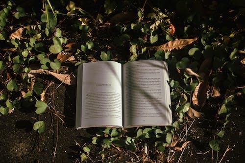 Ảnh lưu trữ miễn phí về bài viết, bản văn, đất, hệ thực vật