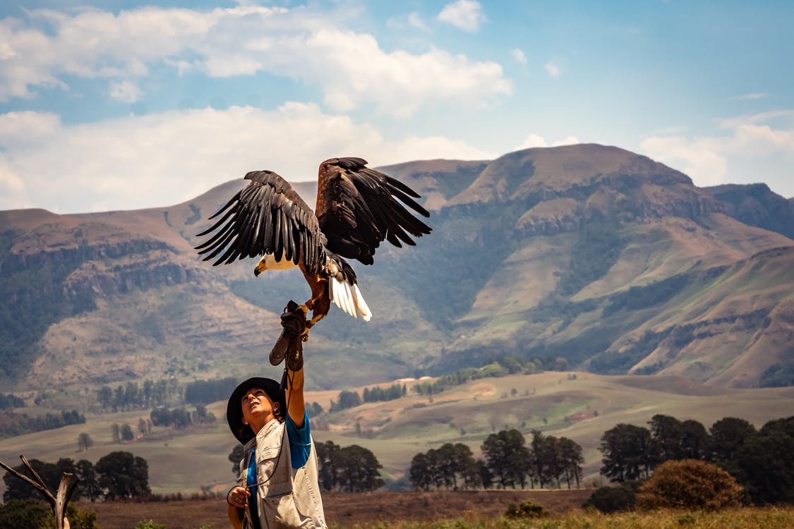 Black and White Eagle Near Man