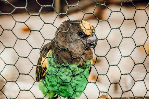 Green Yellow and Black Bird on Brown Metal Cage