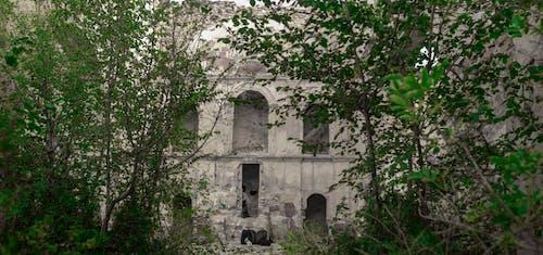 Kostenloses Stock Foto zu naturleben, verlassene gebäude, verlassene kirche, verlassenes haus
