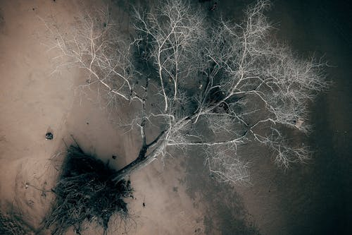 Aerial Photography of a Tree
