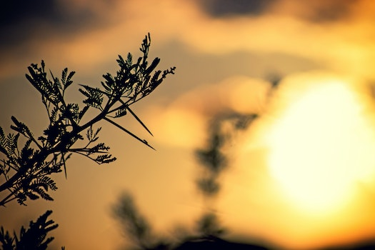 Free stock photo of light, nature, sunset, plants