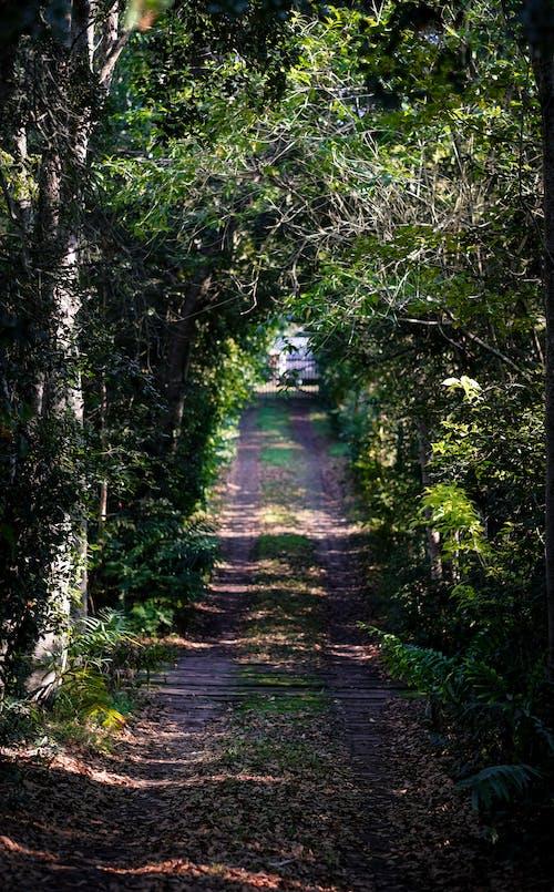 Foto d'estoc gratuïta de bellesa a la natura, boira, camí rural, carretera asfaltada