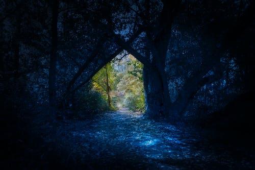 Imagine de stoc gratuită din concept, noaptea în zi