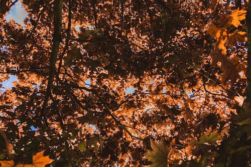 Ingyenes stockfotó barna, esztétika, levelek, ősz témában