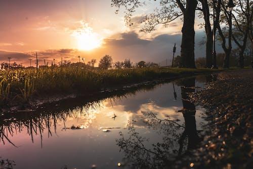 Ingyenes stockfotó esztétika, levelek, Napkelte, naplemente témában