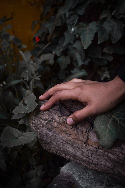 Photos gratuites de bois flottant, centrales, feuilles, individu