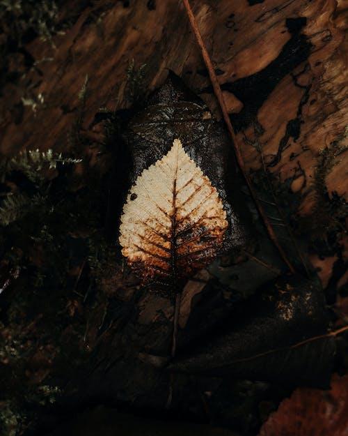 Gratis arkivbilde med bakgrunn, blad, fallblad, falle