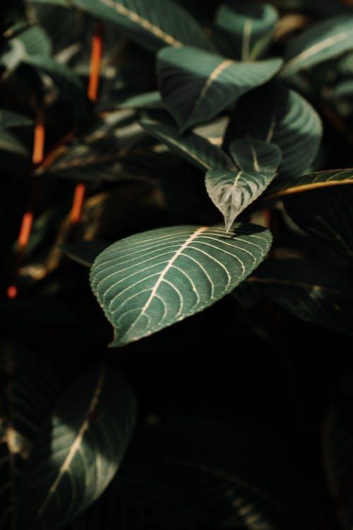 Бесплатное стоковое фото с завод, зеленые листья, зеленый, линии