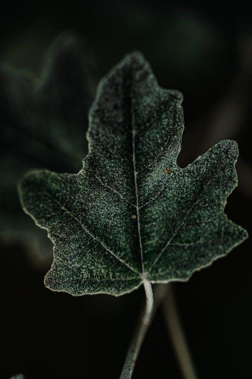 blad, färger, färsk
