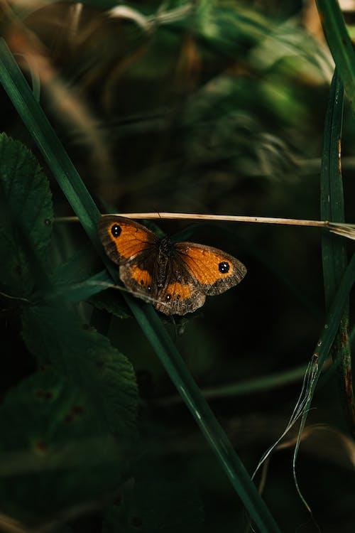 Foto profissional grátis de borboleta, inseto, macro, monarca