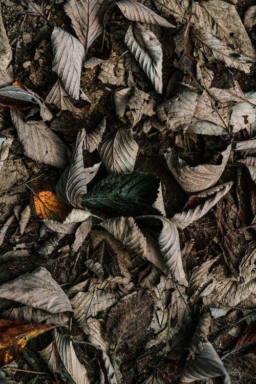 Grey Dried Leaves