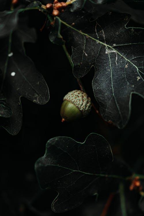 Fotos de stock gratuitas de al aire libre, bellota, color, crecimiento
