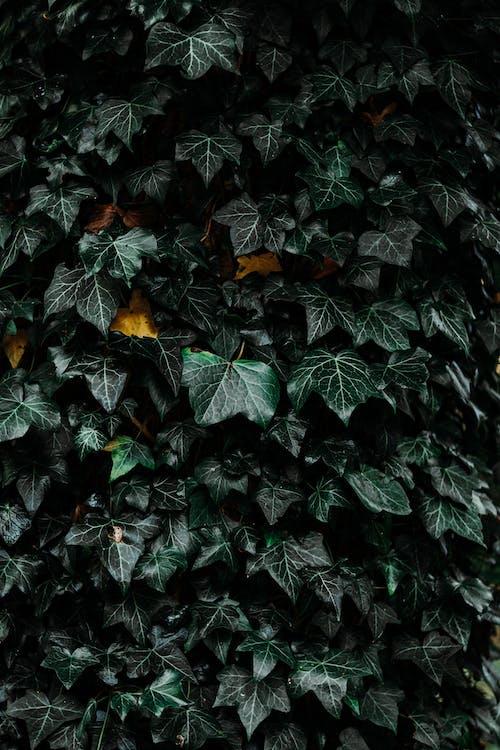 Gratis stockfoto met bladeren, donkere achtergrond, fabriek, groen