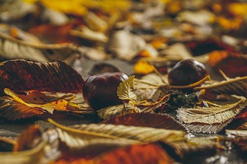 Darmowe zdjęcie z galerii z jesienne liście, rozmyte tło, rozmyty, spadanie