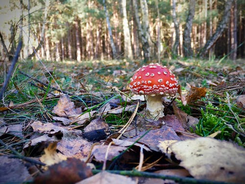 Free stock photo of autumn, autumn leaves, mushroom