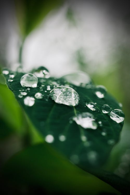 Free stock photo of after the rain, dark green plants, green