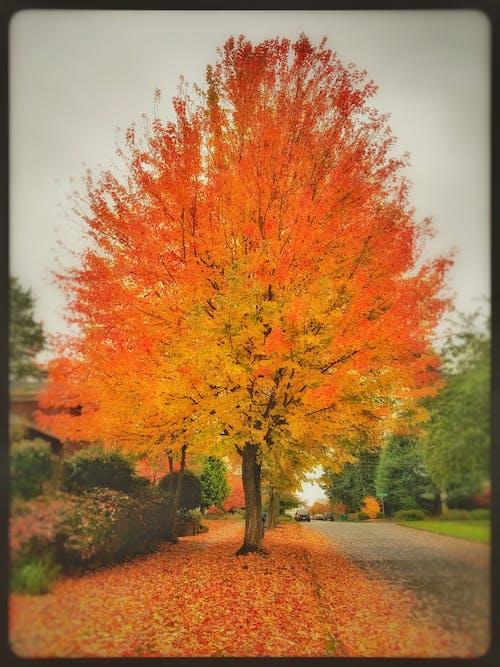 Free stock photo of autumn colors, autumn leaves, autumn mood