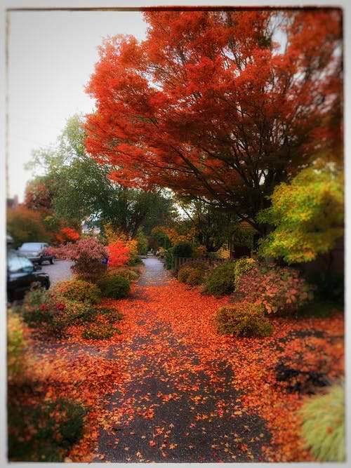 Free stock photo of autumn, autumn color, autumn colors