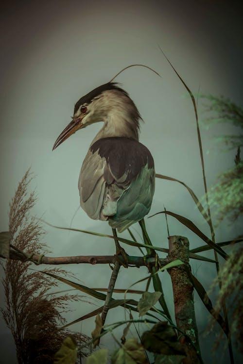 Gratis arkivbilde med fjær, fugl, villdyr