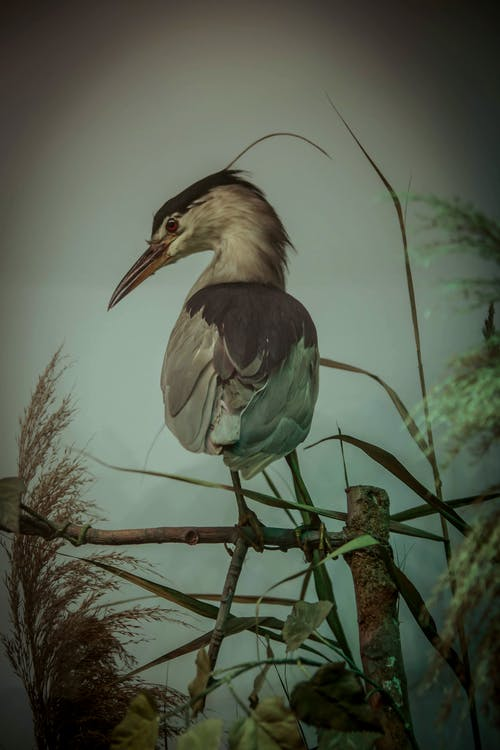 Free stock photo of bird, feathers, wild animal