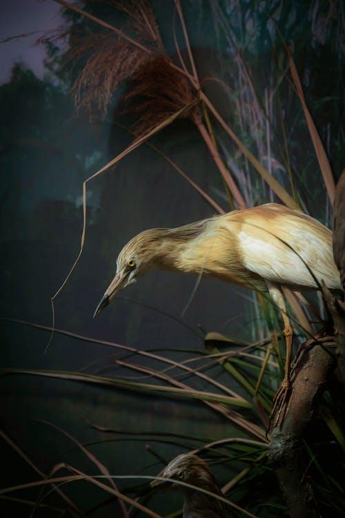 Gratis arkivbilde med dyr, fjær, fugl, skog