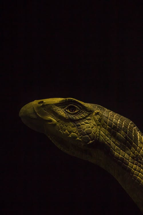 Gratis stockfoto met angstaanjagend, beest, close-up, dieren in het wild
