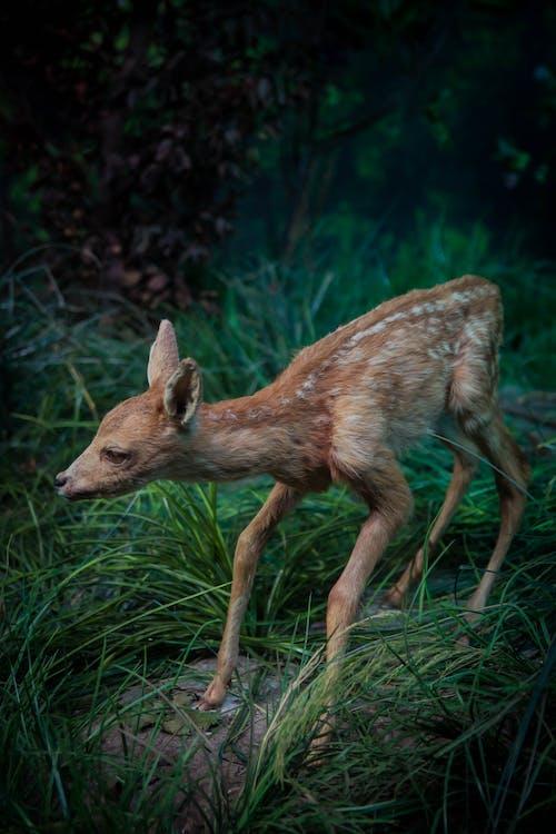 Gratis arkivbilde med hjort, skog, villdyr