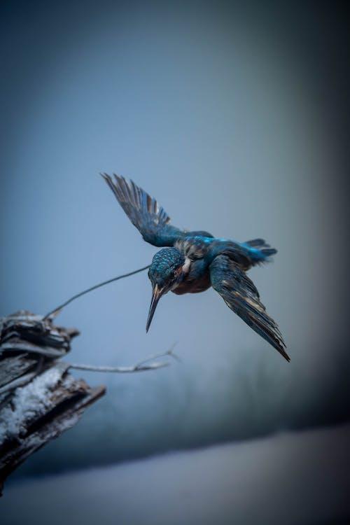 Gratis arkivbilde med fly, flyging, fugl, villfugl