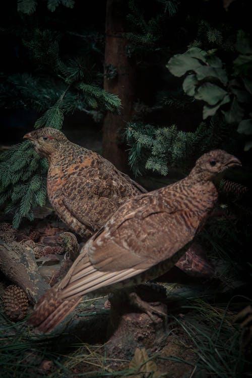 Gratis arkivbilde med dyr, fugl, vill