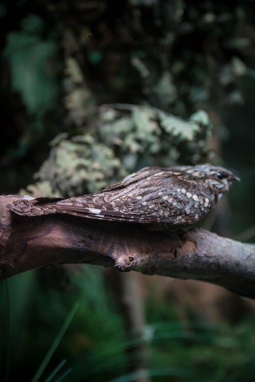 Gratis arkivbilde med fjær, fugl, skog, villdyr