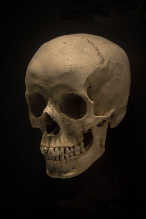 Gratis arkivbilde med bein, hodeskalle, kraniet, menneskeskalle