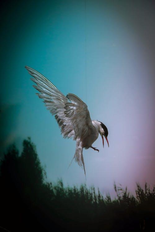 Gratis arkivbilde med fjær, fly, flyging, fugl