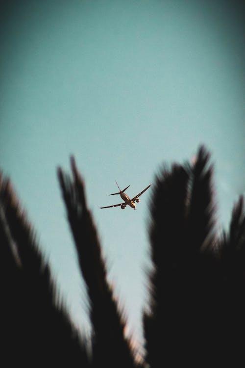 Kostenloses Stock Foto zu fliegen, flug, flügel, flugzeug