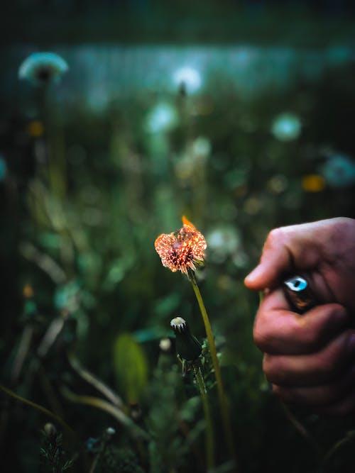 Blume In Flammen