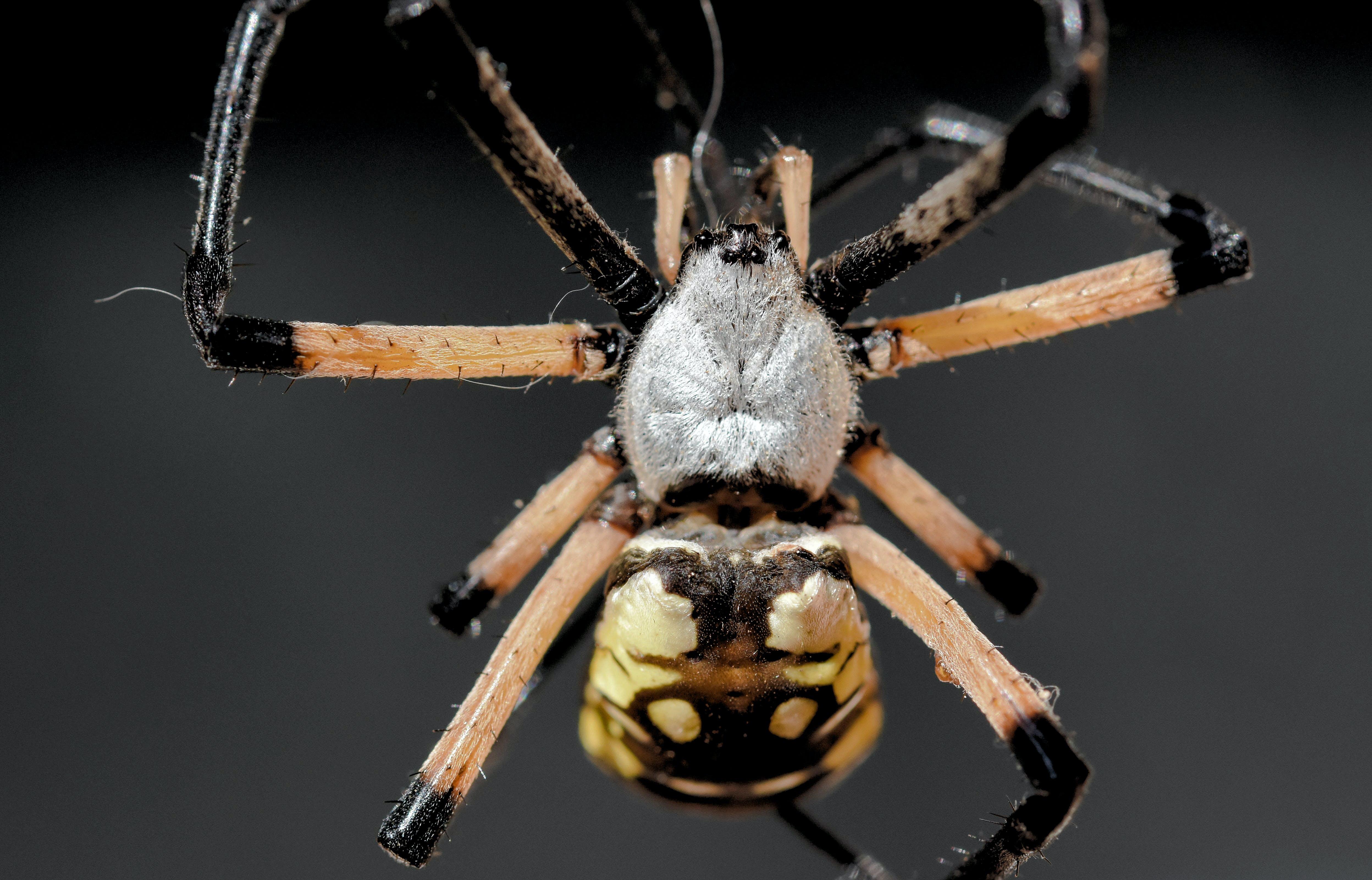 Free stock photo of arachnid, spider