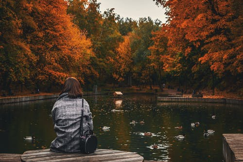 Back View Photo of Woman Sitting Wooden Surface Near Body of Water
