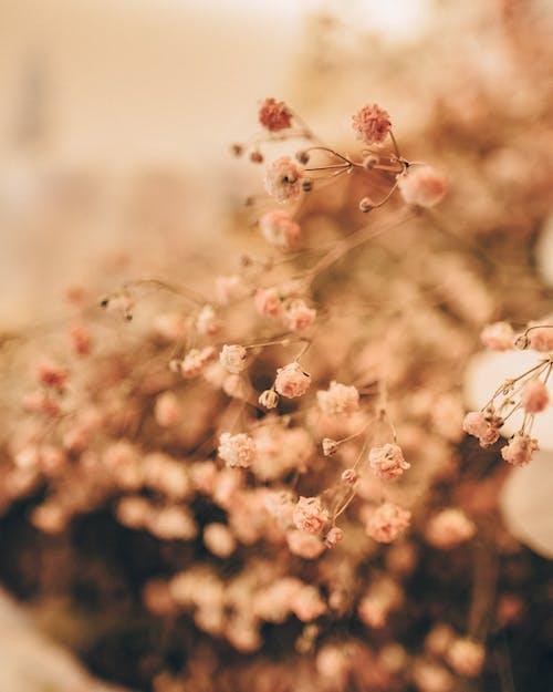 alan derinliği, bitki örtüsü, bulanıklık, büyüme içeren Ücretsiz stok fotoğraf