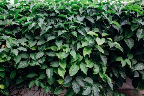 Darmowe zdjęcie z galerii z krzew, liście, listowie, roślina