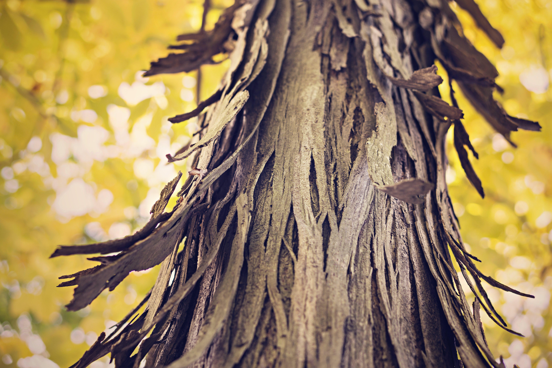 Closeup Photography of Black Tree