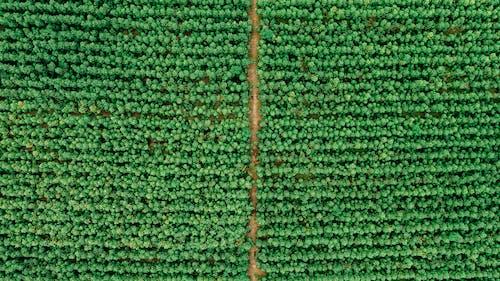 Безкоштовне стокове фото на тему «drone камери, безтурботний, денний час, дрон»