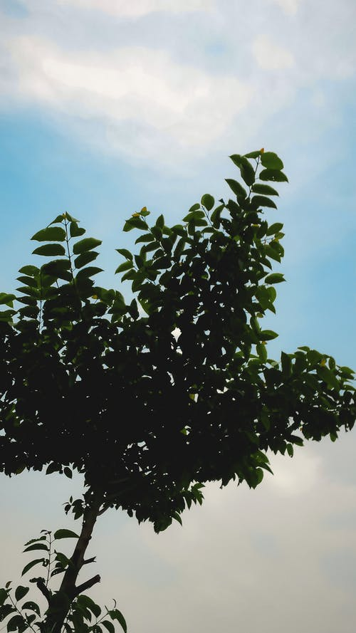 Fotos de stock gratuitas de cielo azul, fondo azul, hoja verde, hojas
