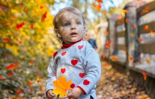 akçaağaç yaprağı, alan derinliği, ayakta, bebek içeren Ücretsiz stok fotoğraf