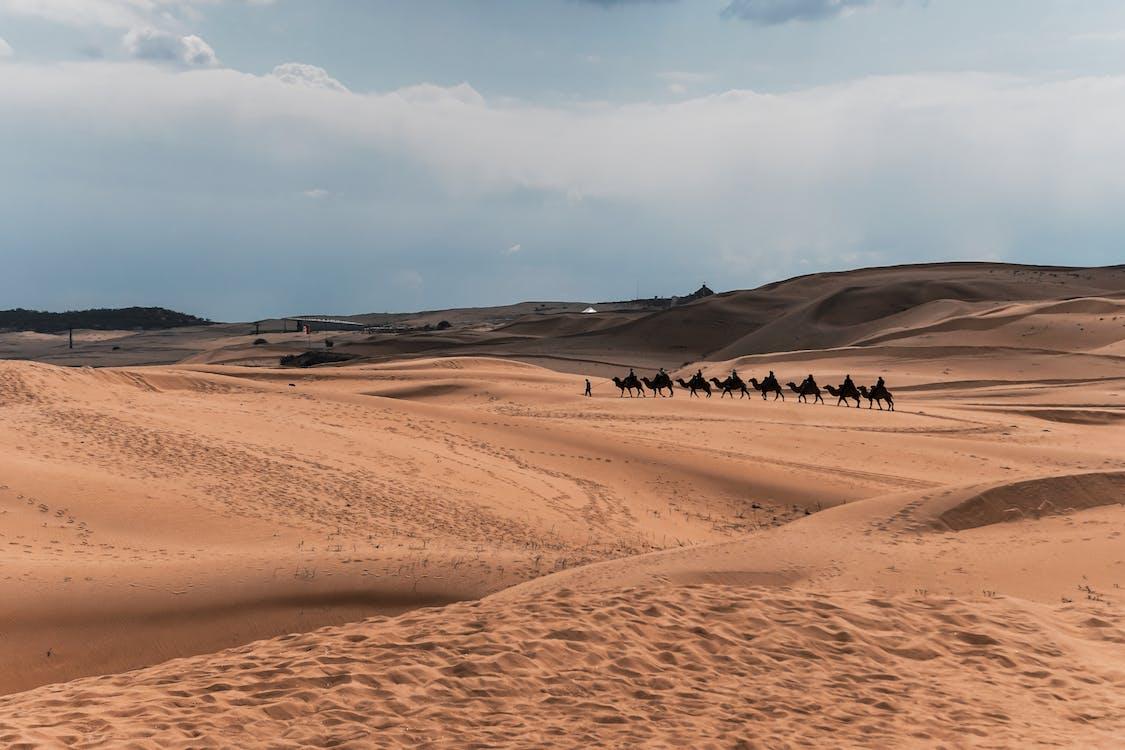 alam, bukit pasir, gersang