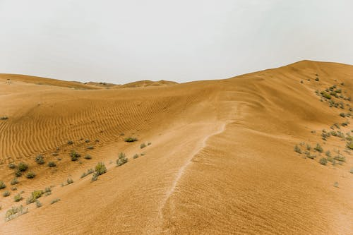 Landscape Of Sandy Dunes In The Desert