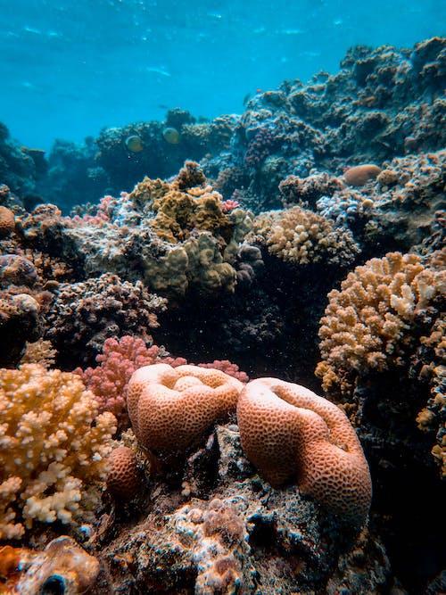 Fotobanka sbezplatnými fotkami na tému hlboký, koraly, more, oceán