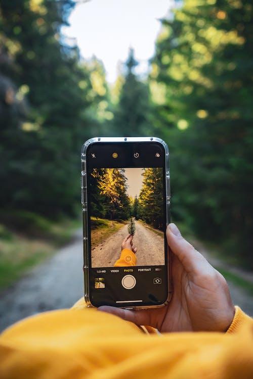 Ingyenes stockfotó elmosódott háttér, fák, fényképez, homály témában