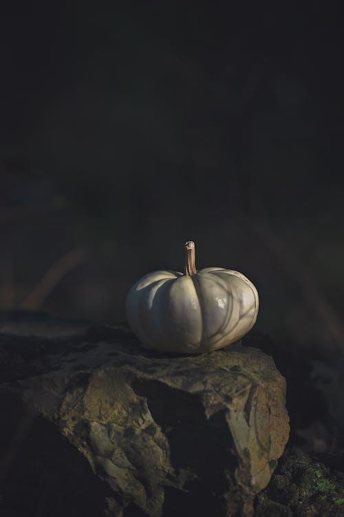 Photos gratuites de automne, citrouille, halloween, tomber